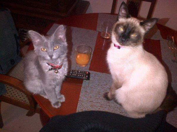 => Hermione & Hilaya <=