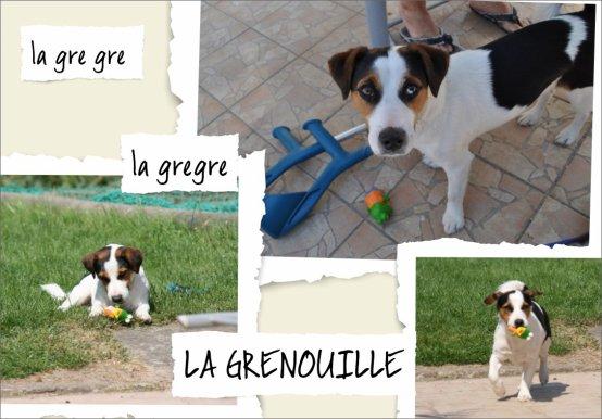 MA GRENOUILLE  !!!!!!!!!!!!!!!!!!!!!!!!!!!!!!!!!!!!!!!!!!