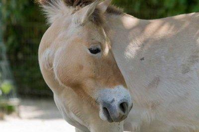 un cheval.......