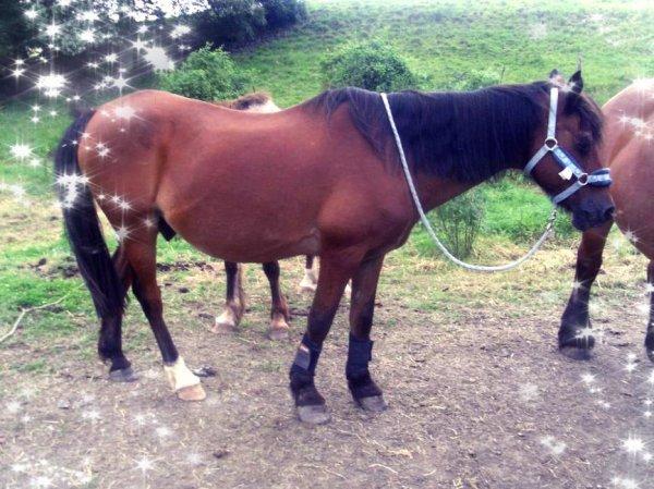 Journée du Jeudi 28 Juin avec mon poney !!