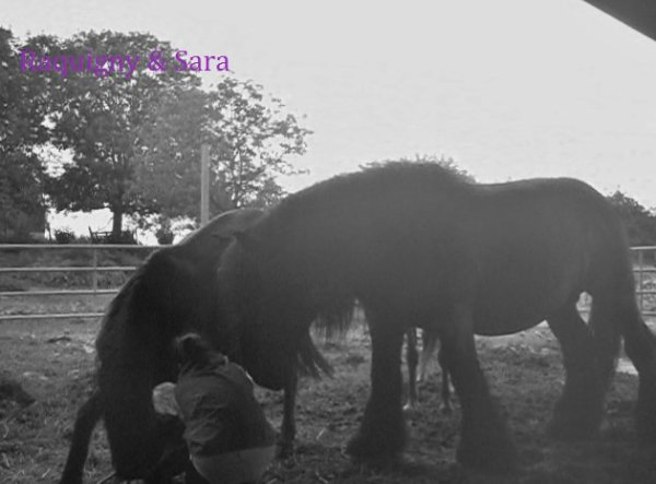 Séance du 28 aout 2012 poney parfait :)