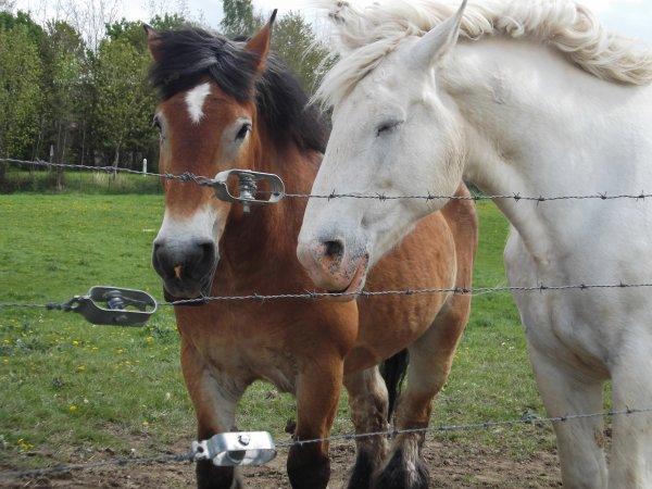 [Astuces & Conseils n°5] Mon cheval s'ennuie ...