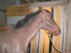 [Astuces & Conseils n°13] Mon cheval / Poney n'est pas aimable au box !
