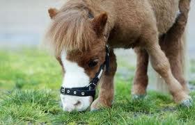 [ Astuces & Conseils n°14 ] Un nom pour mon cheval !