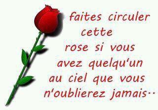 jolie rose rouge a la penser que j'aime