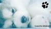 Cuuute-Animal