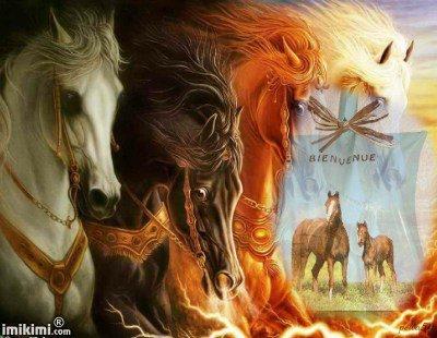 pèle chevaux
