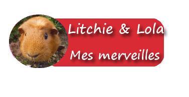 Bienvenue sur mon blog de mon cochon d'inde <3