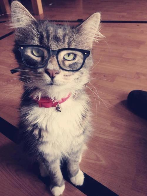 Mon Chat Vidics, Le Dr Dit Que Sa Vue Est Faible, Il a Dit Qu'il Avait Besoin De Lunettes! Mon Pauvre Chat MDR²²