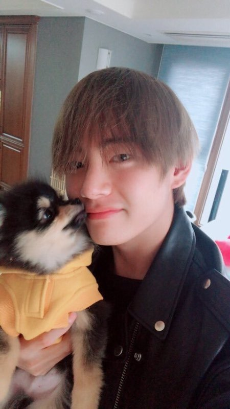 Stars & pets - Taehyung & Yeontan