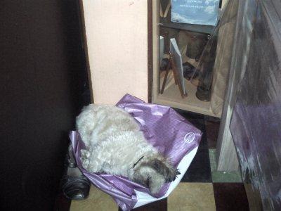 champion qui dort sur un sac
