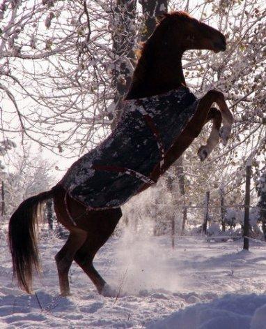un cheval se cabre c magnifique