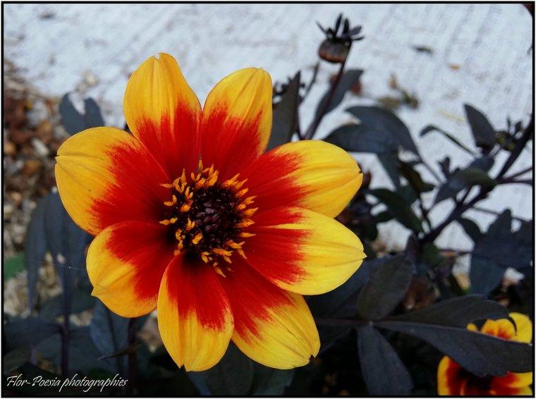 Fleurs ♥