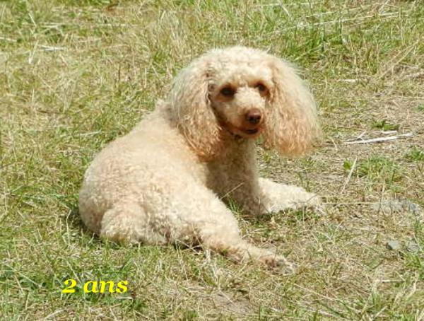 LYNA A 6 ANS (29 avril 2011)