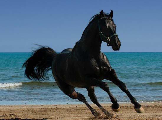 image le cheval