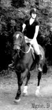Photo de Equestre-Cagnoncles