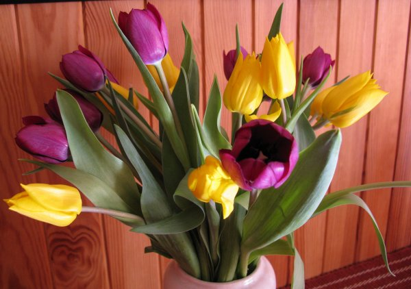 Fleurs à volonté ! vive le printemps ♥♥♥