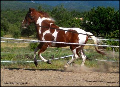 >> Entre l'homme et son cheval, l'amour est tel que l'un ne peu vivre sans l'autre...