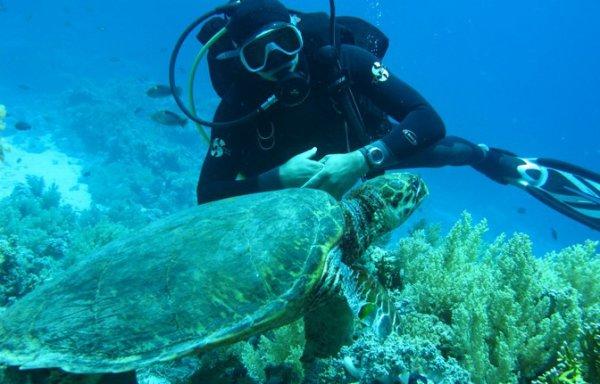 diving ( plongee sous marine)