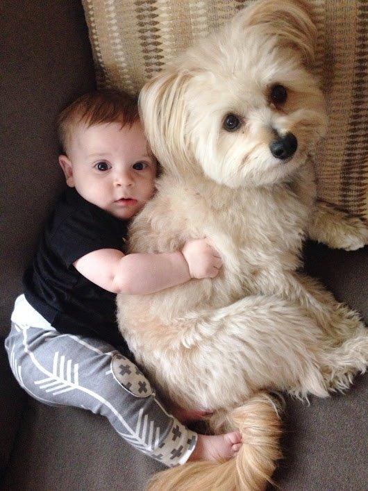 Le chien...