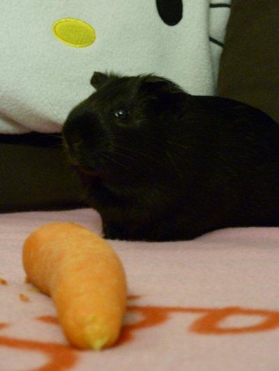 Séance photo :  je mange une carotte