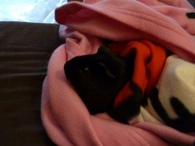Il fait froid, je veux être bien au chaud dans le plaid de ma maman :)