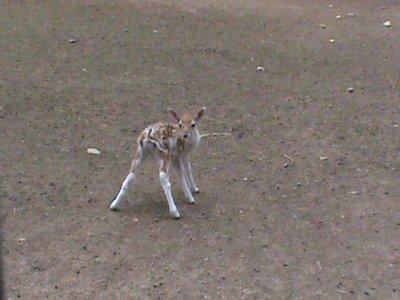 Parc animalier part 7