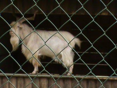 Parc animalier part 8