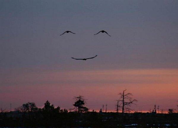 """""""Un bon arbre peut loger dix mille oiseaux.""""   Proverbe birman"""