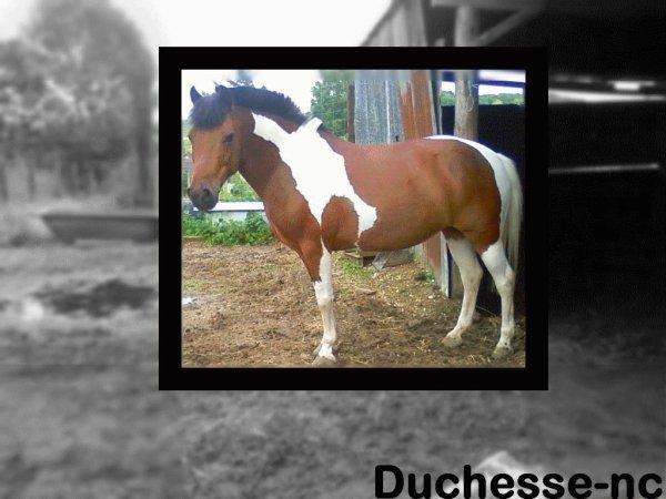 PRESENTATION                                     Duchesse-nc.sky ©