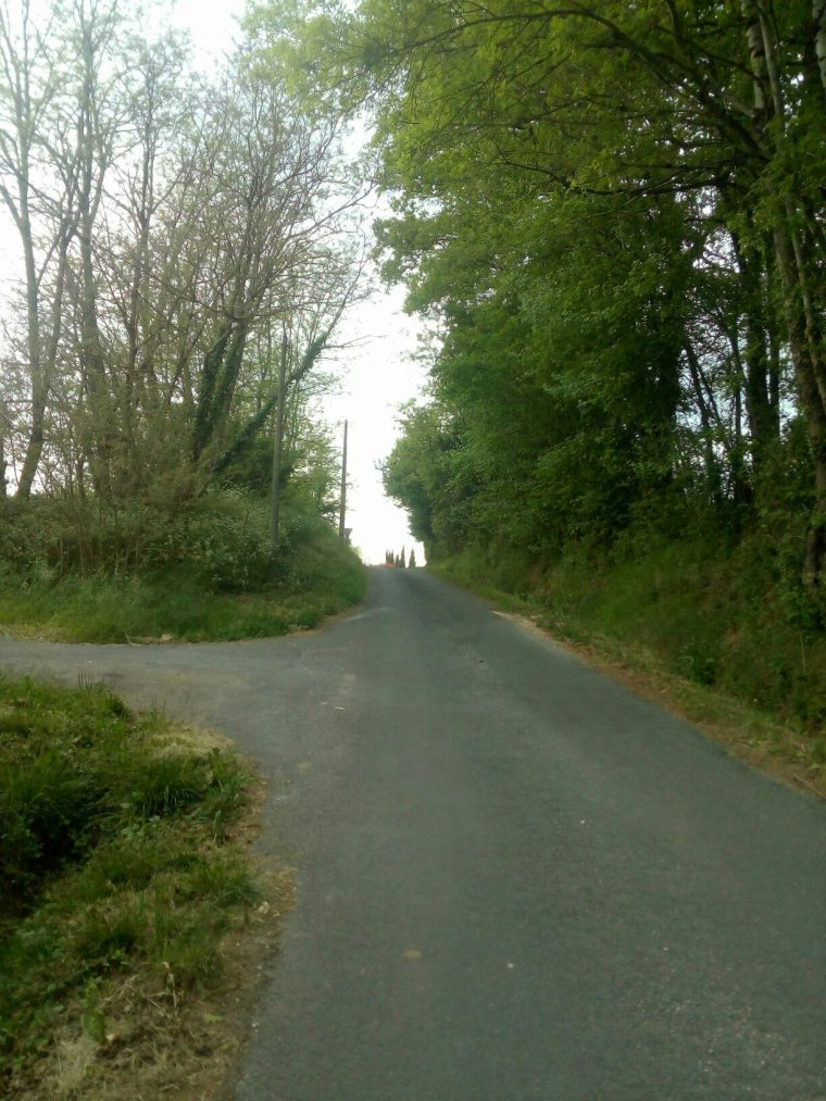 Route ombragé