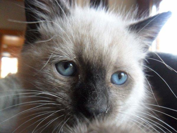 L'amouur d'un chat
