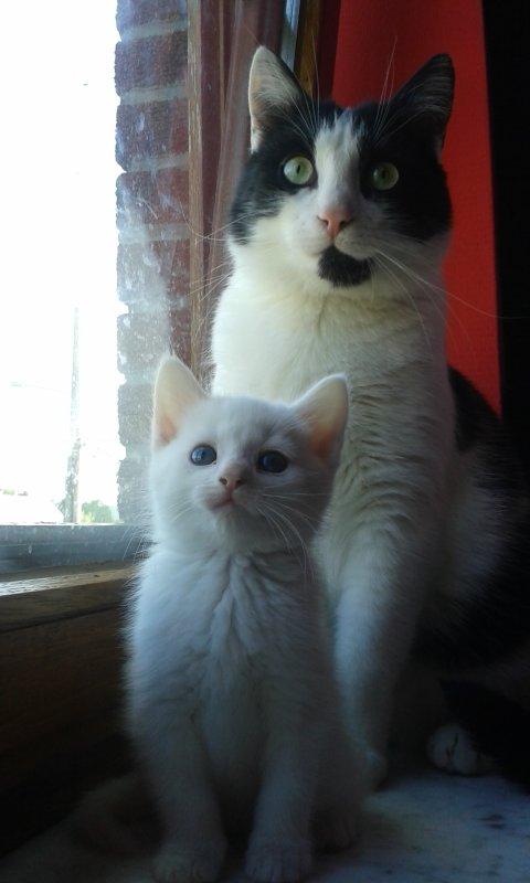 Tyminou et Nala