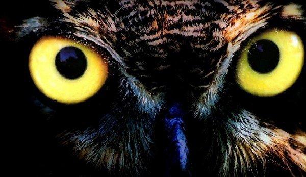 """"""" Dieu aima les oiseaux et inventa les arbres. L'homme aima les oiseaux et inventa les cages. """" (Jacques Deval) ♥"""
