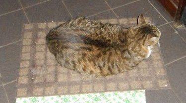 déjà 7 semaine que tu es partie mémère - Hommage as mémère une de mais chatte décède