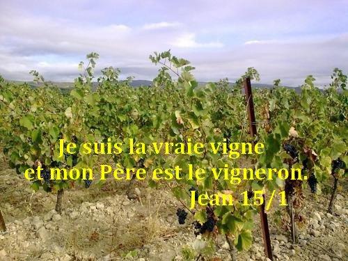 Art 1562 : Cinquième dimanche de Pâques