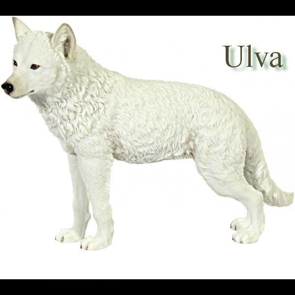 Ulva, la louve blanche