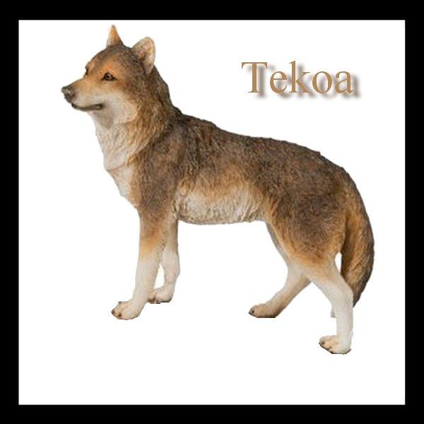 Tekoa, l'apprenti