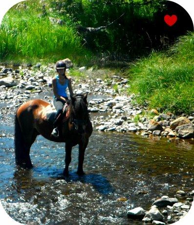 Certaines personnes rêvent d'avoir un scooter, une voiture de luxe, d'être riche ... mais moi mon rêve c'est d'avoir mon cheval :) Bien plus qu'un rêve : ma vie !<3
