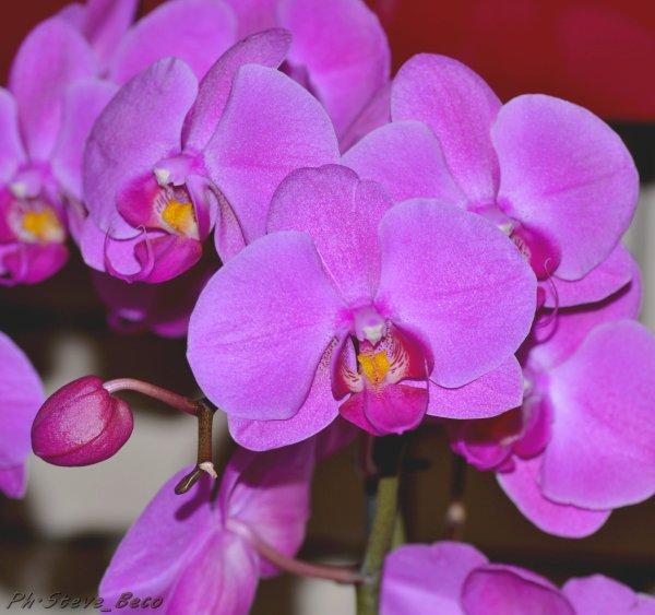 Orchidée pour mettre un peux de couleur.