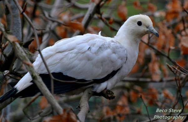 Cigogne, colvert ,une oie , et se qui ressemble a une colombe je suis pas sur, mais j'avais envie de la mettre ;-) .
