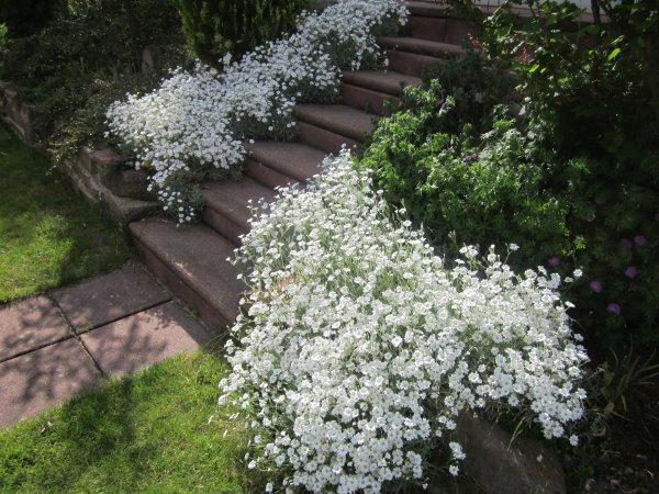 Après les lilas et la glycine, la dominante de couleur des fleurs de notre jardin est toujours le violet, avec les iris et le rhododendron