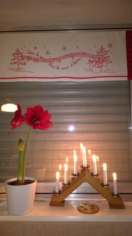 Mon amaryllis en fleurs...