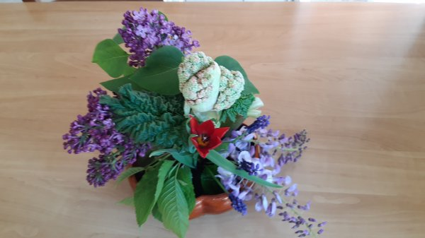 Rhubarbe en fleurs