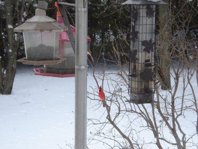 le Québec en hiver et ses visiteurs !!