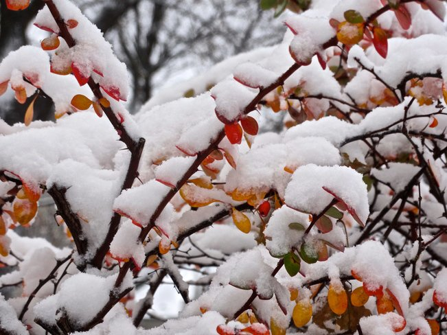 neige au Québec- 21-11-16