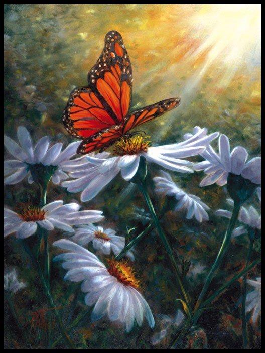 Le papillon !!!