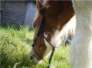 Photo de le-poney-du-bonheur