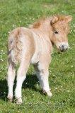 Photo de comms-chevaux