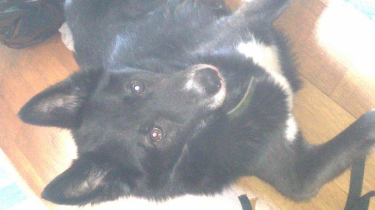 Mon chien: démon :-)